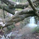 Tree that fell blocking the path (the path is covered in water)