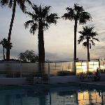 palms and pool evening