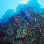 Diving Bloody Bay Wall, Little Cayman, Cayman Islands