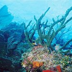 Diving Bloody Bay Wall, Little Cayman, Cayman Islands