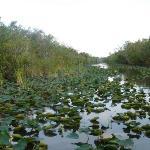 Les everglades à Miami