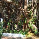 beautiful huge tree at bhuping garden