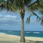 Looks like a desktop? Well it ain't!  Northern beaches of Oahu