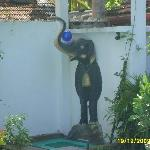 Elephant-shower, poolside