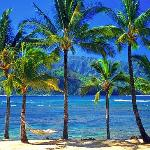Hawaii Hammock