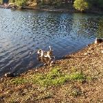 Down at the lake- dog friendly!