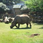 Rhino...large and in charge.....