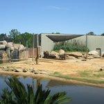 The elepants....