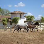 Horses at Rancho Santana