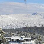 Hindseter in winter-