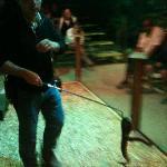 Poisonous snake show