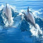 See the big group of wild dolphins (50+)