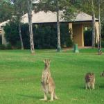 This was where we stayed at the Wyndham Hunter Valley Resort.  The kangaroo visited us almost ev