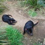 Bilde fra Trowunna Wildlife Sanctuary