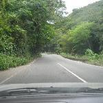 driving through Fern Gully