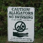 Lake Louisa SP - Dixie Lake alligator warning!