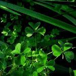 Boothbays Summer green
