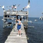 White seagulls and blue water add to the outdoor pleasures of Bay watching.