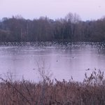 Foto de Rye Meads Nature Reserve