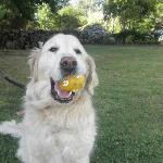 Jasper playing