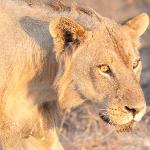 Photo de Shenton Safaris Kaingo Camp