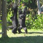 Naples Zoo at Caribbean Gardens ภาพถ่าย