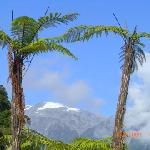 Rainforest & Mountain Views
