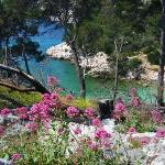 Calanque de Port-Pin à Cassis