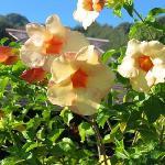 Au coeur d'un magnifique jardin fleuri