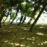 palmas en el area de la playa