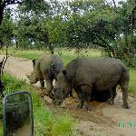 impresionantes los Rinocerontes, nos cortaron el paso y tuvimos que dar la vuelta.