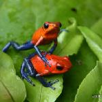 Tour our farm and find the Blue Jeans Frogs!