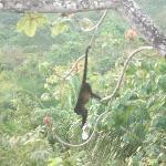 monkey at balcony Hacienda Del Cielo, San Juanillo