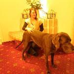 le beau et aceuillant chien