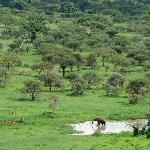 The view from the lodge: elephant drinking & impalas
