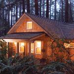 The cabins are set in a peaceful forest of 100 ft trees