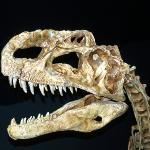 Royal Tyrrell Museum of Palaeonthology - Drumheller (AB)