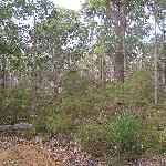Surrounded by natural bushland