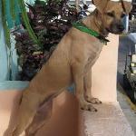 Boca waits to greet new guests at Zina's Guest House Isla Mujeres