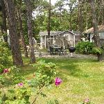cabins on 5 acres of beautiful natural grounds
