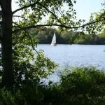 A sailboat on the lake