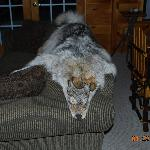 furs and skins too.  Front room of Gramps Cabin