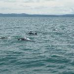 Dolphins in the Bay in Osa