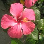 there are many beutiful flowers