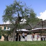 Al fresco wedding lunch