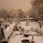 back garden in december