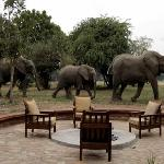 Elephants passing through the camp