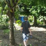 Walking in between the cabinas - fresh coconut palms :) yum yum
