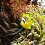 Blue Paradise Diving Center Photo