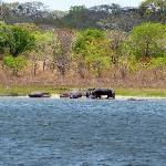 Flusspferde am Lifupa See